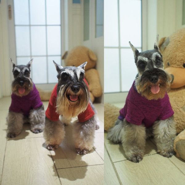 Knitting Sweater Puppy Clothes Winter Outwear Apparel Costumes