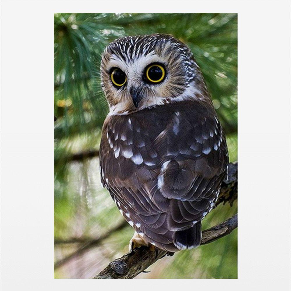 Naiyue 9558 Owl Print Draw Diamond Drawing